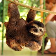cutest sloth ever!!!