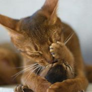 mum and kitten