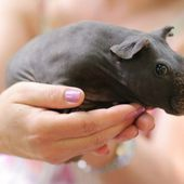 THIS IS WHAT A NEWBORN HIPPO LOOKS LIKE. precious!