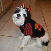 dog dressed as Lil Devil for Halloween