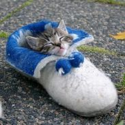 Slipper kitty...