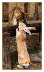 Bunny and kitty love...