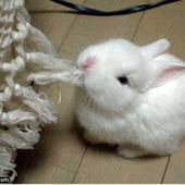tiny cute rabbit