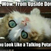 You look like a talking potato... ;-)