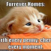 furrever homes: worth every penny cherish every moment