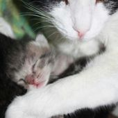 Kitten and mom