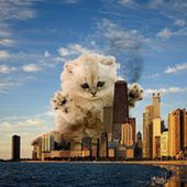 Catzilla lol