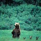 Aww... mama bear and her cubs ♥