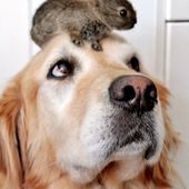 *I have a hare on my head!