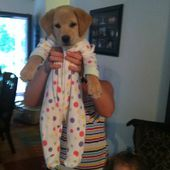 A puppy in footy pajamas.