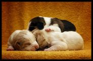 cute puppies ♥!