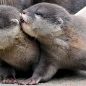 Otters ♥ ♥ ♥
