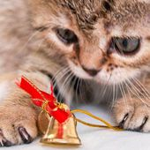 Xmas kitten with bell