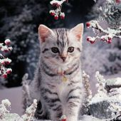 Sparkling Snow Kitty