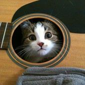 kitty and guitar