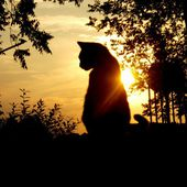 The sunset and kitten