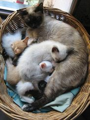 family in the basket