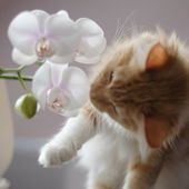 kitty and the flower