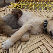 sleepy puppy with friend