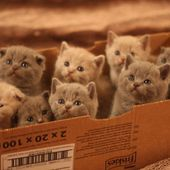 box with kittens