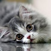 kitty and reflection