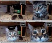 Cat recognises his owner in a video chat
