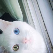 This kitty has the nicest eyes