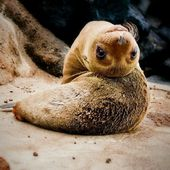 Seal Pups are very flexible!