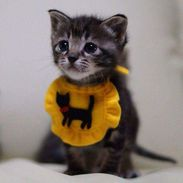 Kitten in a bib