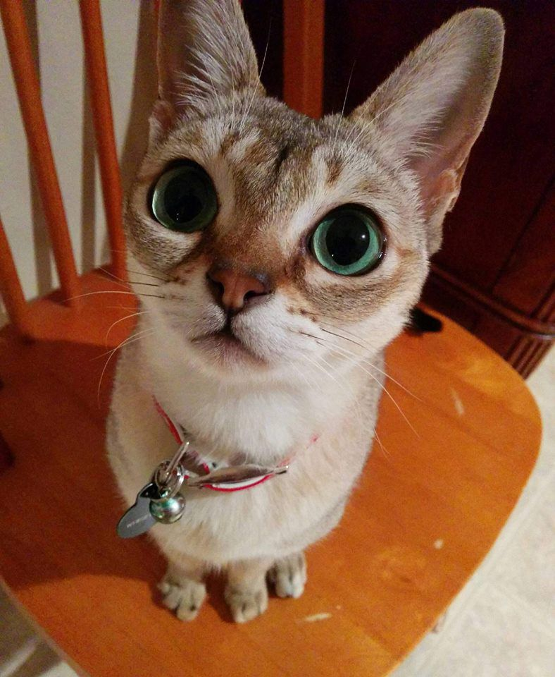 I'm a Singapora, and I have big eyes