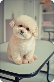 Fluffy pup
