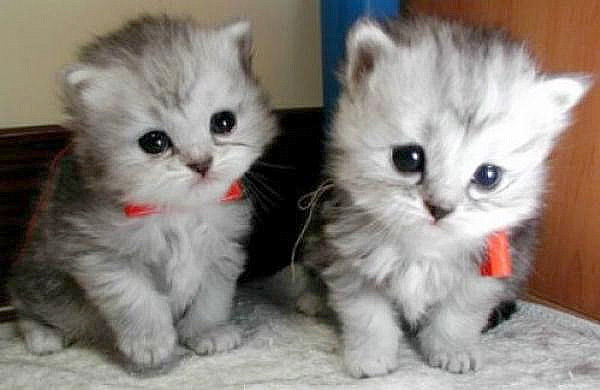 Two adorable kitten