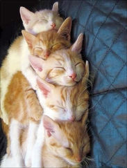 Ginger orange kittens