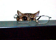 Kitty with eyeglasses