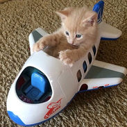 Tower, Requesting Purrmission to Take Off