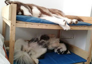 How to keep 250 lbs of Malamute out of your bed