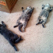 Three little kittens, all tuckered out...