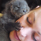 World's luckiest face had a visit from a baby otter