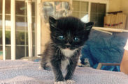 This kitten was found in a poolbox and adopted