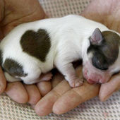 Newborn puppy with heart