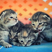 4 cutest kittens